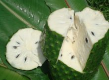 natural-cancer-killer-graviola-10000-times-stronger-than-chemotherapy-600x450